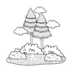 pines forest landscape scene