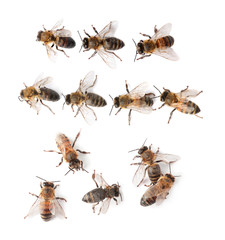 Set with honey bees on white background, top view