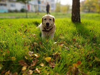 dog in the park