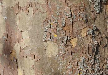 Fotobehang Oude vuile getextureerde muur London plane tree bark