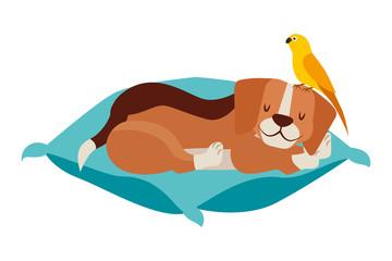 beagle and bird pet on cushion