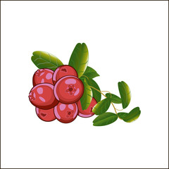 Cranberries isolated icon.