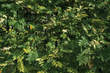 Фон, текстура из зеленых насаждений