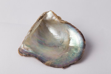 pink pearl oyster shell