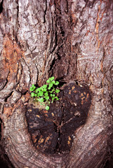 Small green plant growing on old oak trunk, natural organic background texture