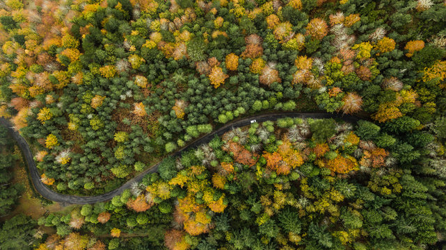 Drone top view over turn road bend in countryside autumn pine forest.