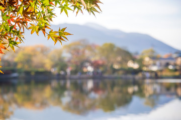 Beautiful red maple leaves at lake kinrinko, oita, Japan, in autumn sunny day, blue sky, close up, copy space