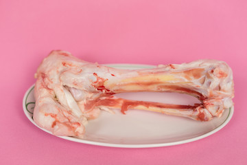 on a pink background in a plate is a bone in the blood