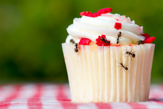 Closeup view of ants on a cupcake. There are several ants. Cupcake is on a checkered tablecloth.