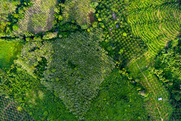 Top down aerial view of deforestation removing rainforest for palm oil plantations Wall mural