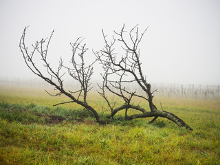 Lonely branch in foggy landscape