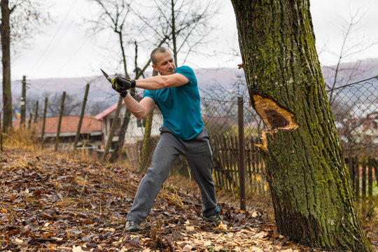 Lumberjack worker chopping down a tree breaking off many splinters in the forest with big axe.