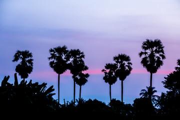 silhouette landscape og sugar palm tree during ultra violet sunset sky