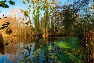 Vue sur un étang rempli de petites lentilles d'eau et algues