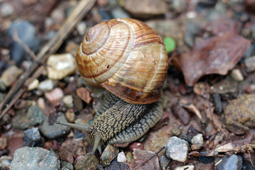 Snail in forest woods close up