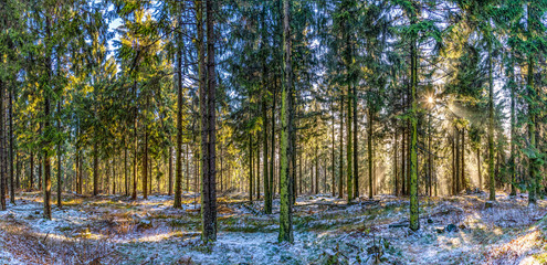 sunrise in early morning in the forest with bright sunbeam