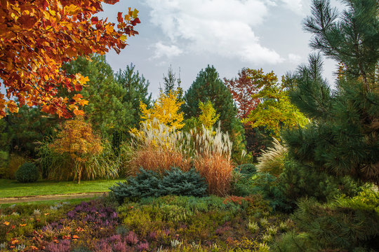 Beautiful alpine hill with trees, shrubs and ornamental grasses in the autumn park. It's a nasty day.
