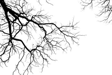silhouette of a leafless tree isolated on white background Wall mural