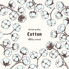 Cotton hand drawn. Vintage vector illustration. Design template. Engraving style. Cotton illustration.