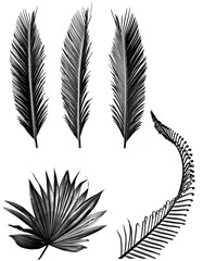silhouettes of palms leaves - black and white picture