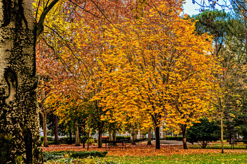 Autumn scene in city park.