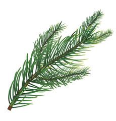 Branch of pine. Vector illustration