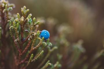 Close up macro photo of moss and lichen plastering bonsai tree