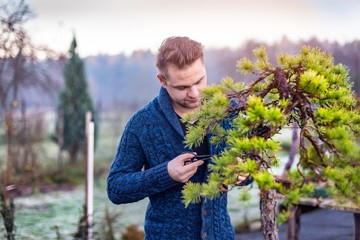 Young man pruning japanese bonsai tree.
