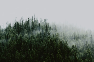 Misty landscape with fir forest. Amazing vintage retro hipster background