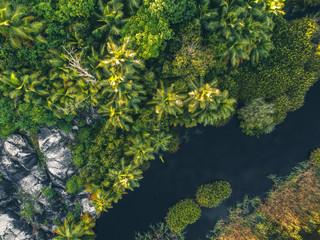Tropical Jungle in Africa III