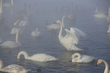 Лебединое озеро, Swan Lake