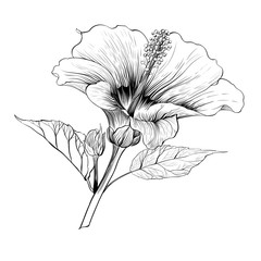 Vector. Hibiscus - flowers and buds.  Perfume and cosmetic plants. Wallpaper. Decorative composition. Use printed materials, signs, posters, postcards, packaging.