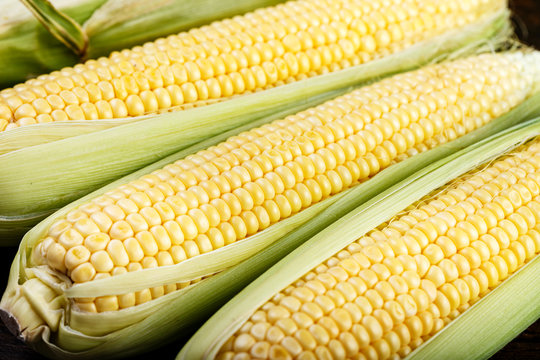 raw sweet corn close up
