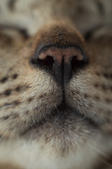 sleeping cat's nose on frame
