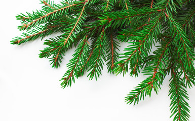 Christmas tree branches on a white background