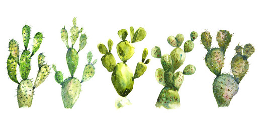 Set of watercolor cactus on white background, watercolor illustrator hand painted