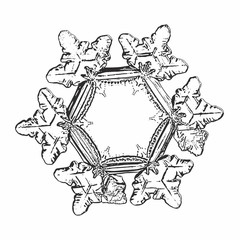 Snowflake isolated on white background. Vector illustration based on macro photo of real snow crystal: elegant star plate with hexagonal symmetry, six short broad arms and complex inner details.