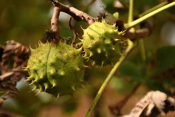 grüner Herbst