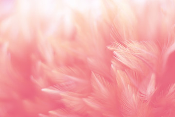Blur Bird chickens feather texture for background, Fantasy, Abstract, soft color of art design. Fototapete