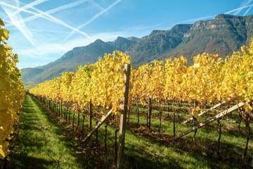 Goldener Weinberg in Südtirol