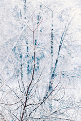 Tree branches covered with ice and white snow