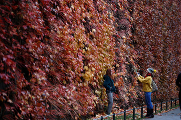 People take photographs of themselves against autumn colours in St James's Park, central London