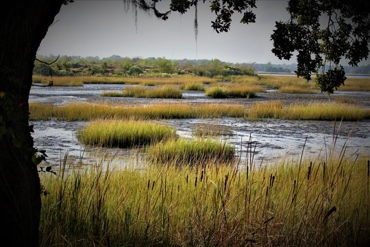 Peaceful Southern Charleston Swamp On A Summer Day