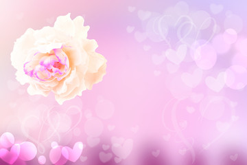 Flower abstract festive pastel background. A white rose blossom in soft focus with pink hearts lovely bokeh for wedding card or Valentine's day. Romantic textured backdrop. Card concept. Space.