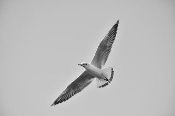 Bird flying monochromatic background