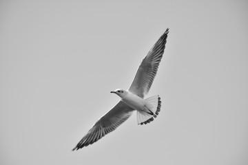 Bird flying monochromatic background