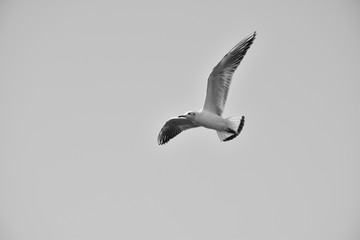 Bird flying monochromatic wallpaper