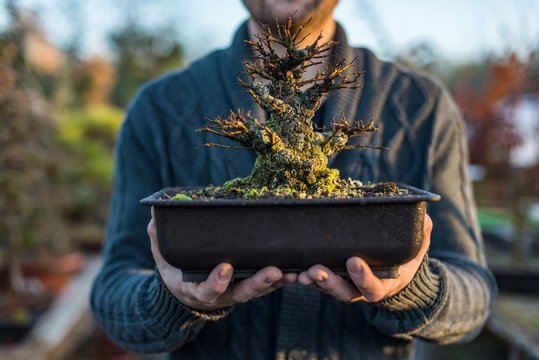 Young man bonsai artist holding pot with bonsai tree