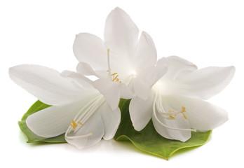 Three white lilies.