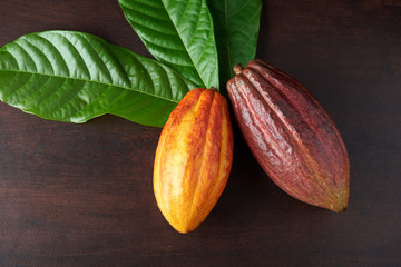 Cacao pods from harvest